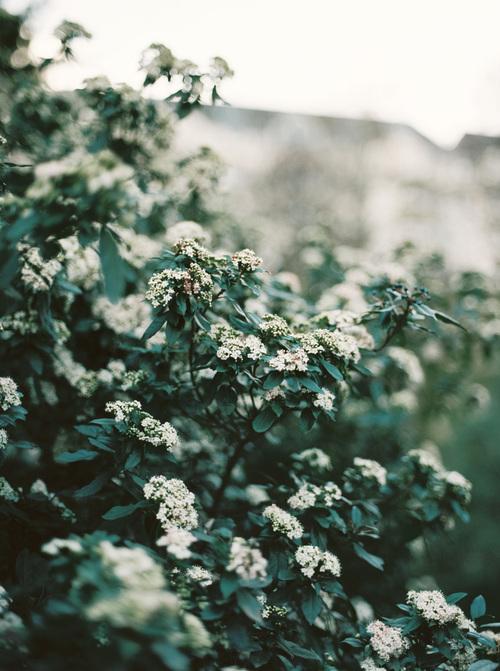 lara-lam-photography6.jpg