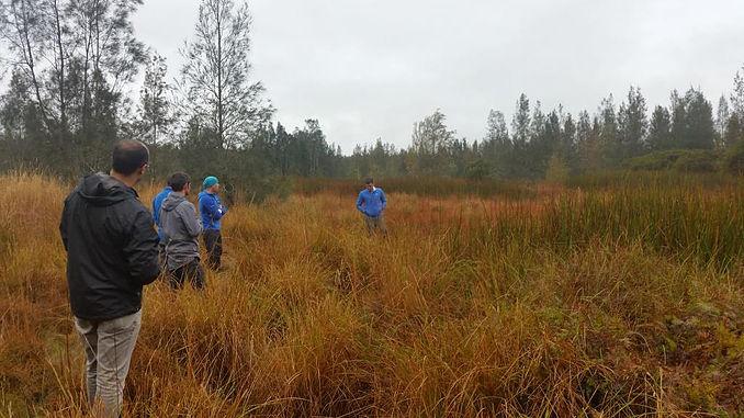 Wetland carbon project.jpg