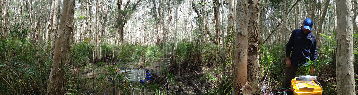 Dr Damien Maher overlooking the chamber incubation flux rates within the Melaleuca forest