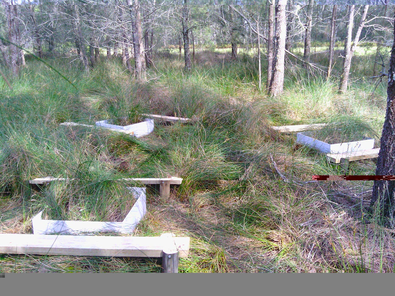 Future study sites resembling picnic areas, ready to quantify seasonal vegetative methane emissions