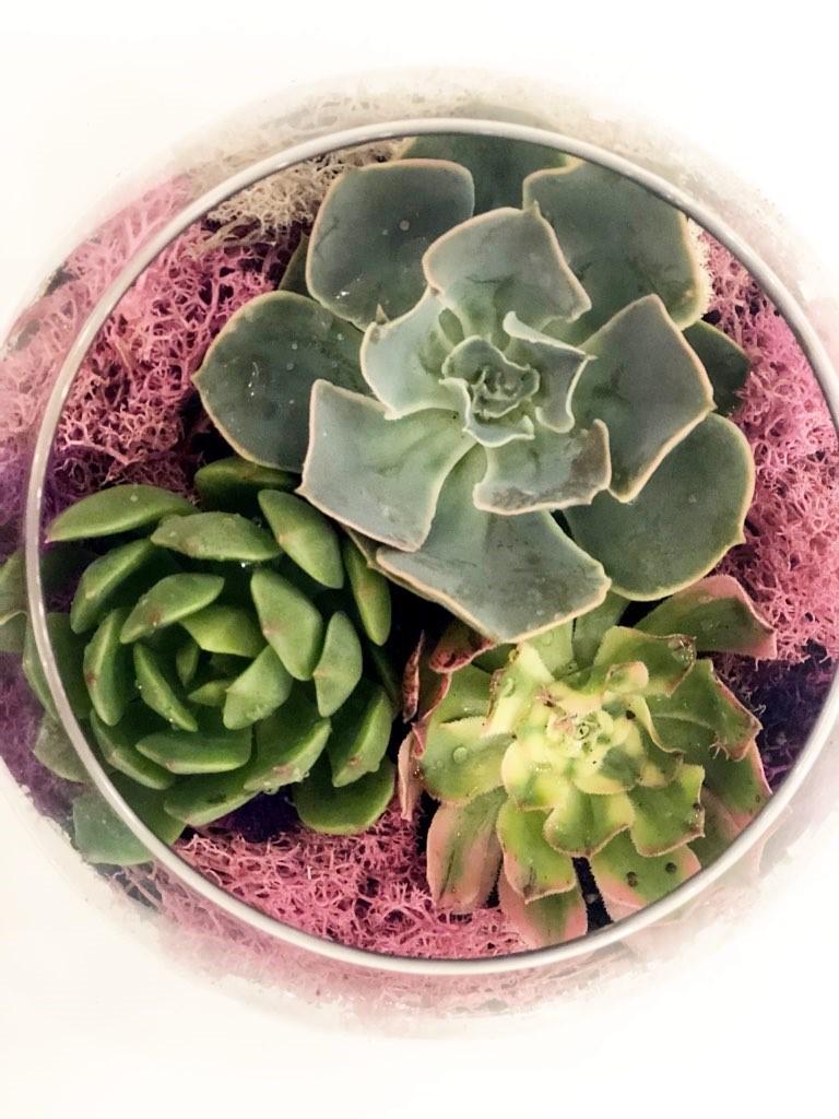 Succulents. Mint Studio.jpg