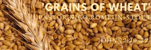 grains-of-wheat_orig.jpg