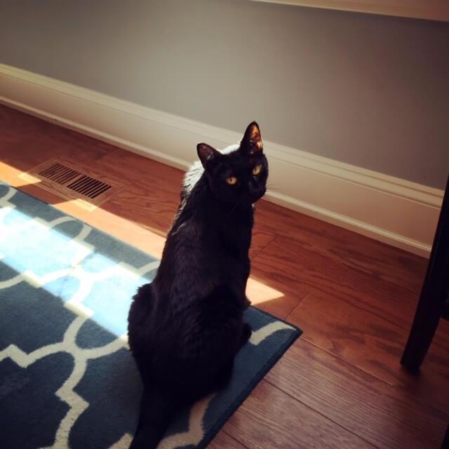 cat, behind the scenes, portfolio pictures