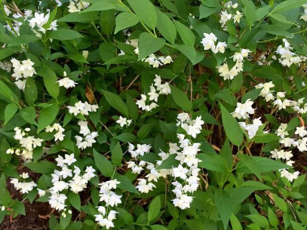 landscape design, spring flowers
