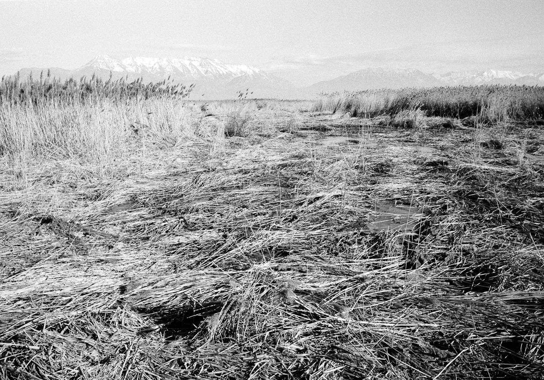 Mountains&ReedsSM.jpg
