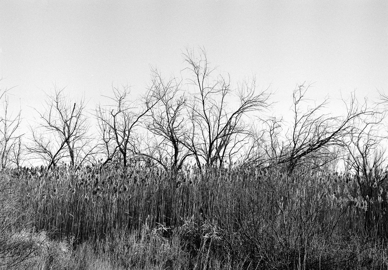 Reeds&TreesSM.jpg