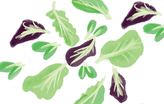 the-vurger-co-vegetable-garden-mix-salad-leaves.jpg