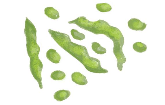 the-vurger-co-vegetable-garden-Broad-Beans.jpg