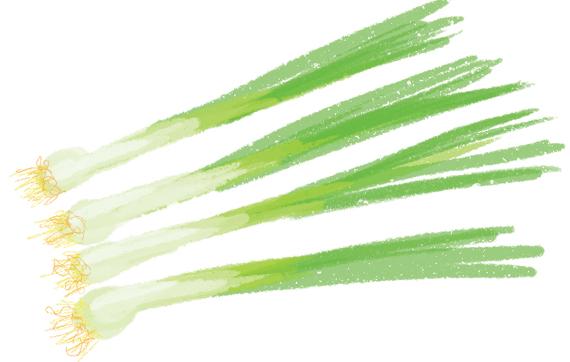 the-vurger-co-vegetable-garden-spring-onios.jpg