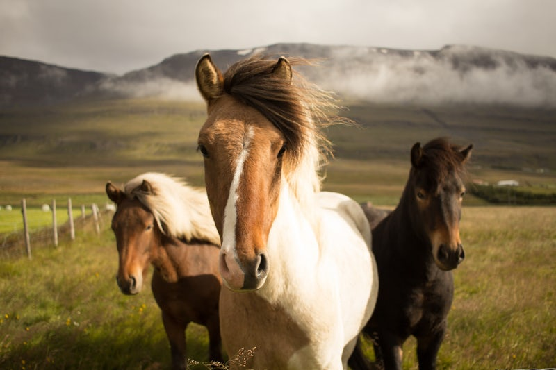 three horses.jpeg