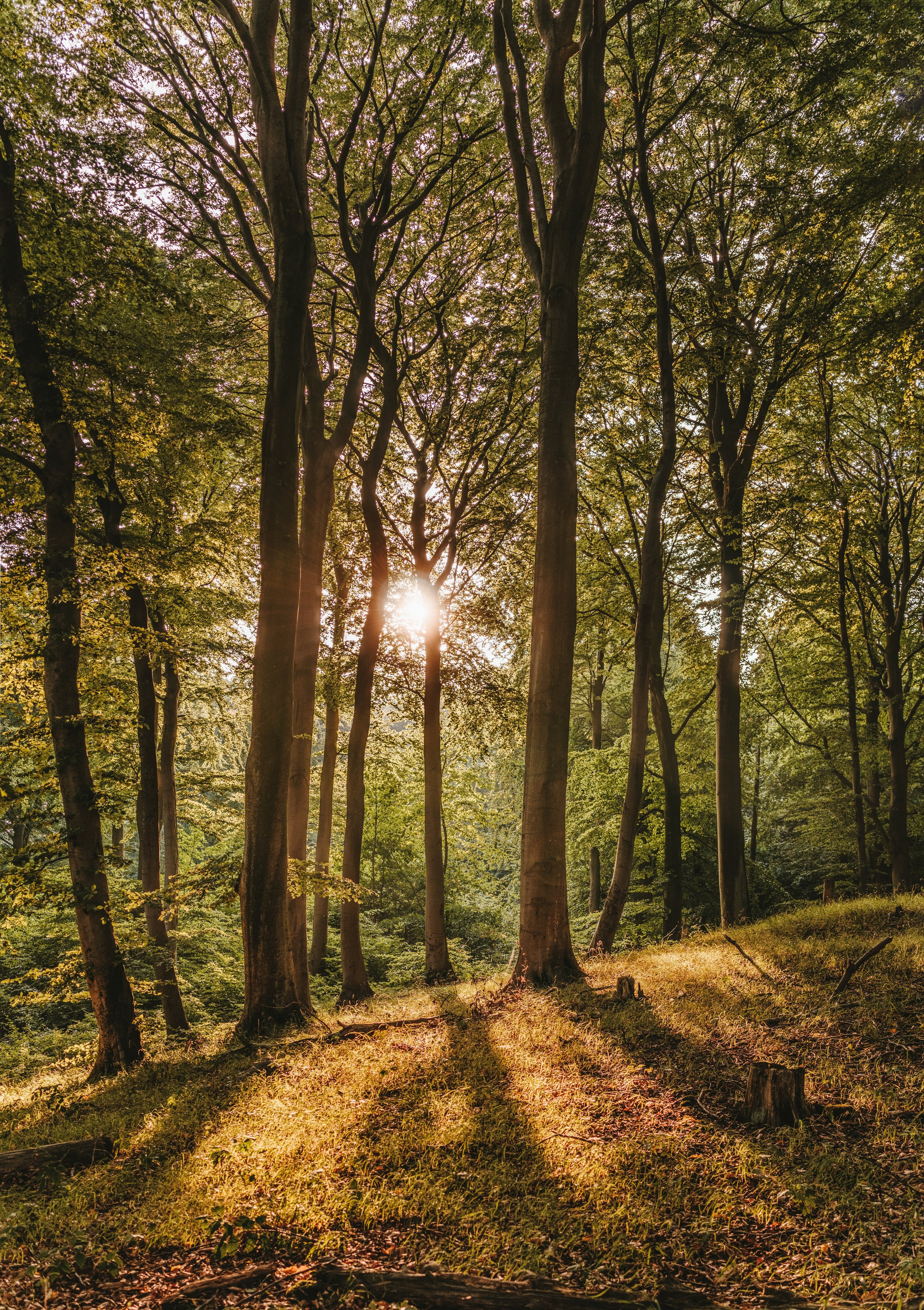 Sun shines through the leaves of a thickly wooded area.  Photo by  Felix Mittermeier  from  Pexels
