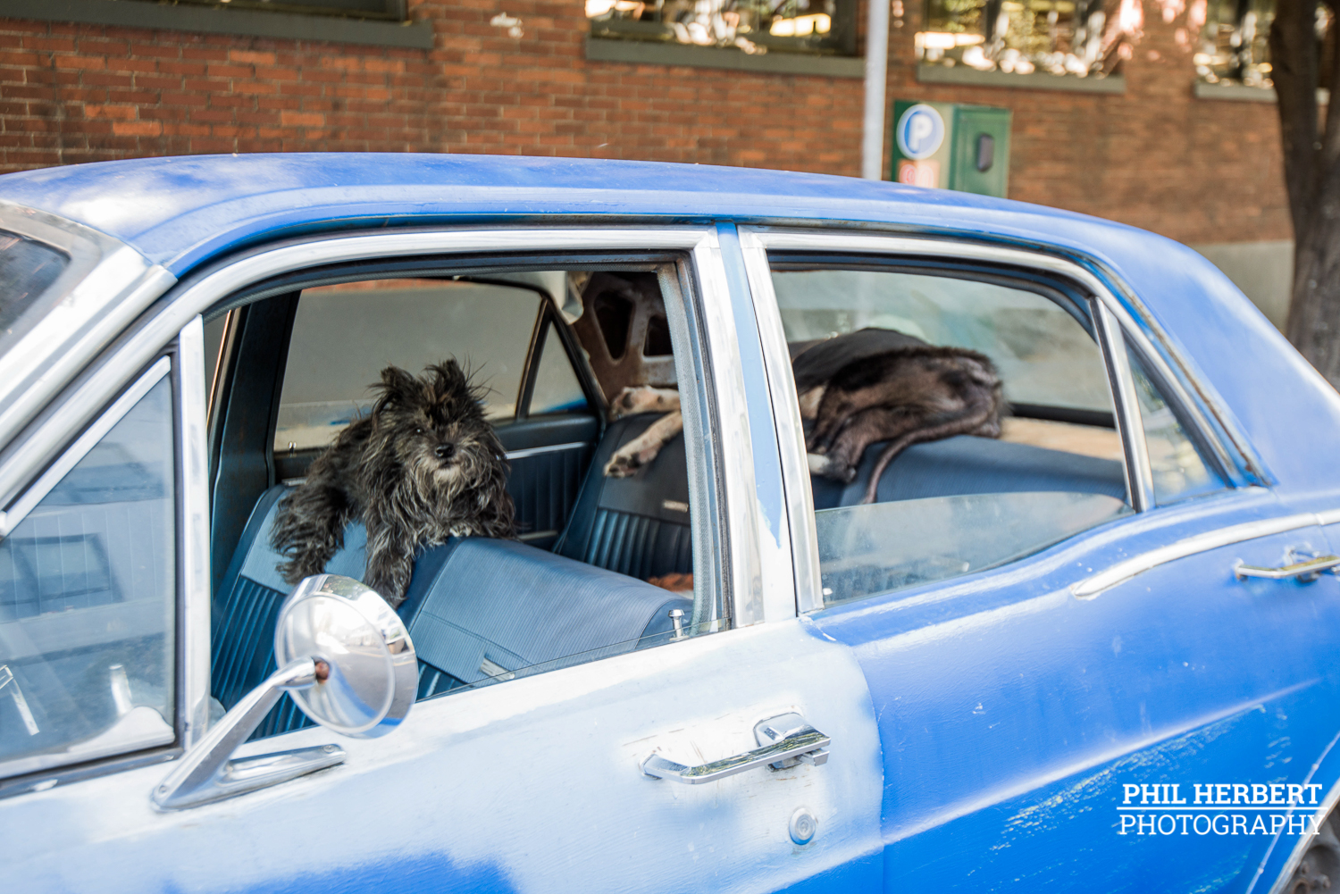 dogs_in_car.jpg
