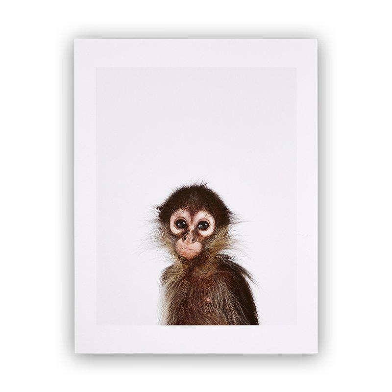 Baby Monkey, Animal Print Shop