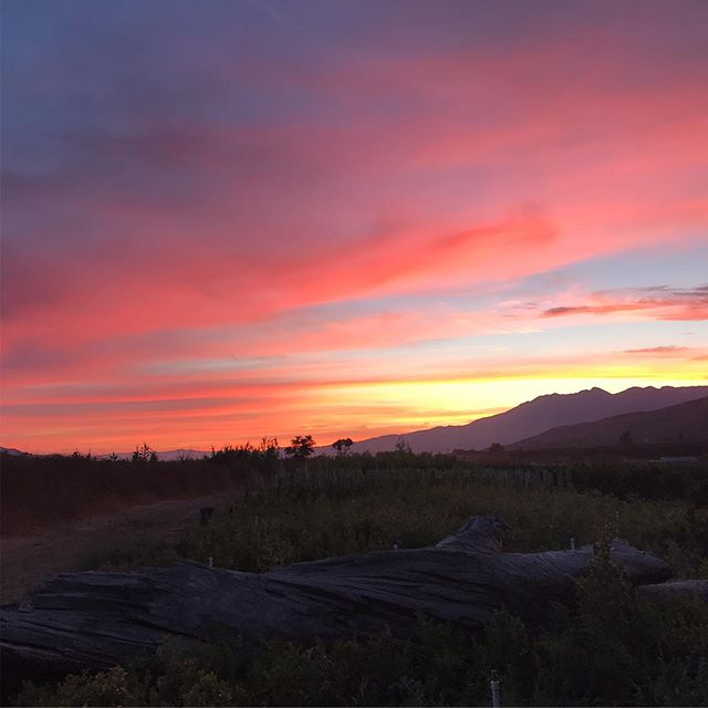 Did you see the spectacular sunset last night?  It happens because the sun is lower on the horizon during summer and light has a chance to go through more air causing the blue light to scatter away from our eyes 🌈  #summersunset #themoreyouknow #nofilterneeded #venturacounty #805 #fillmoreca