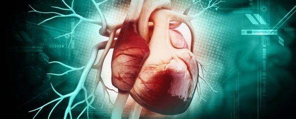 human-heart-anatomy-concept-shutterstock_600.jpg