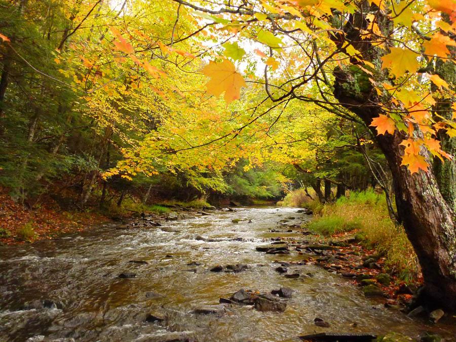 headwater stream watershed Bee Run WV DEP.jpg