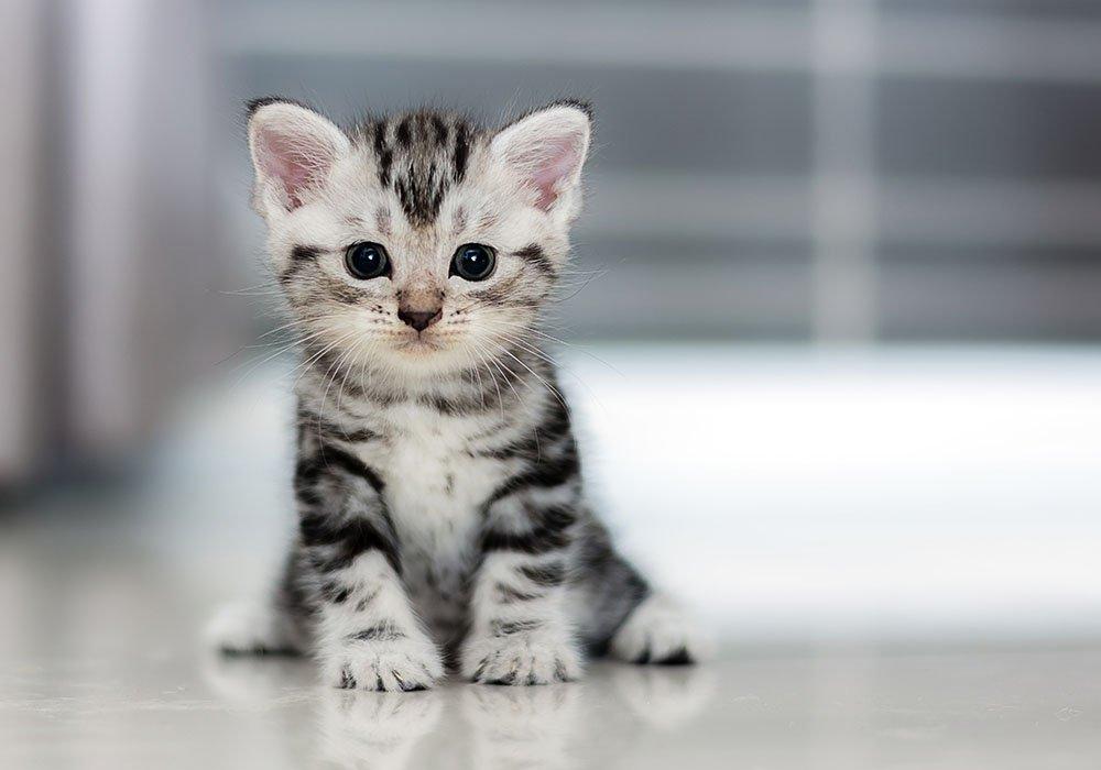 4-ways-cheer-up-depressed-cat.jpg