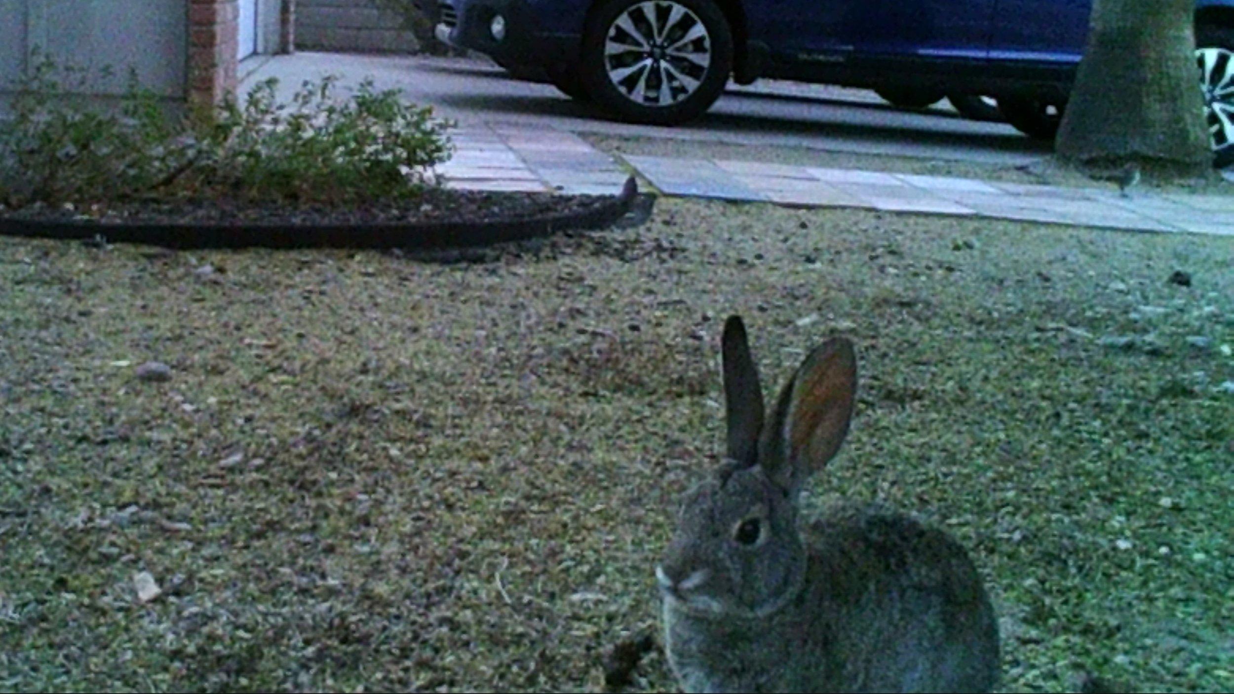 bunnies6.jpg