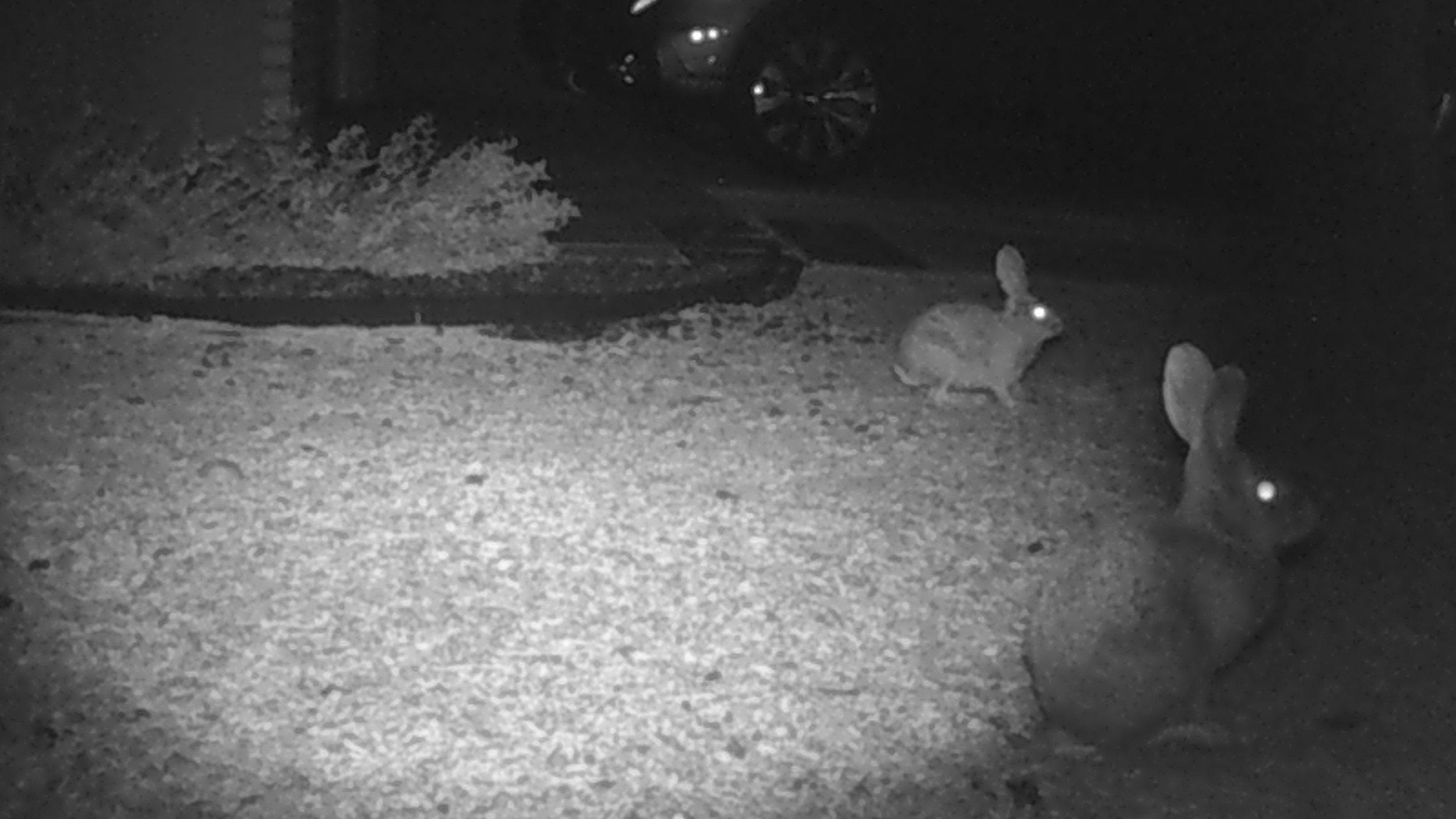 bunnies8.jpg