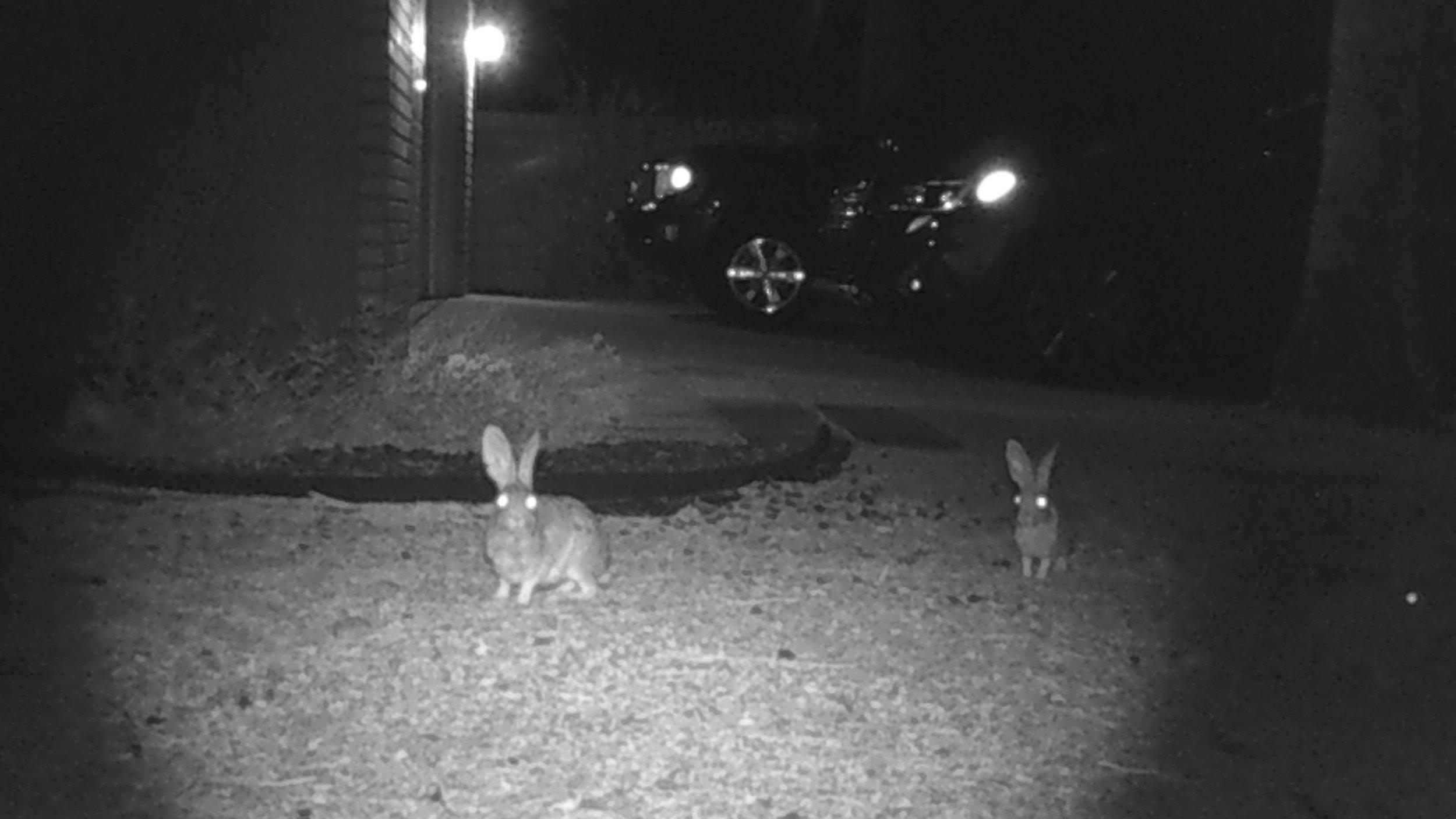 bunnies10.jpg