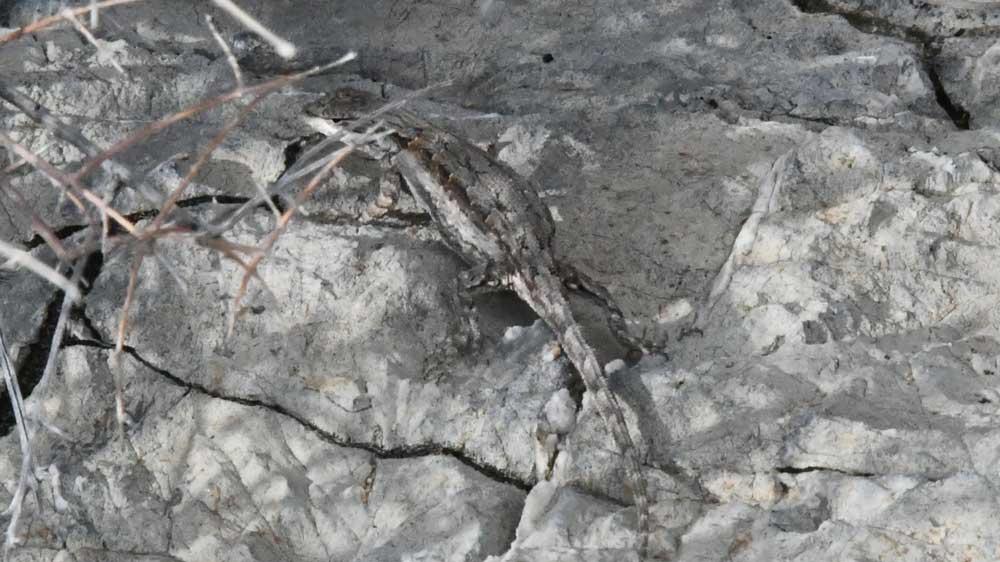 bowie-4-lizard.jpg