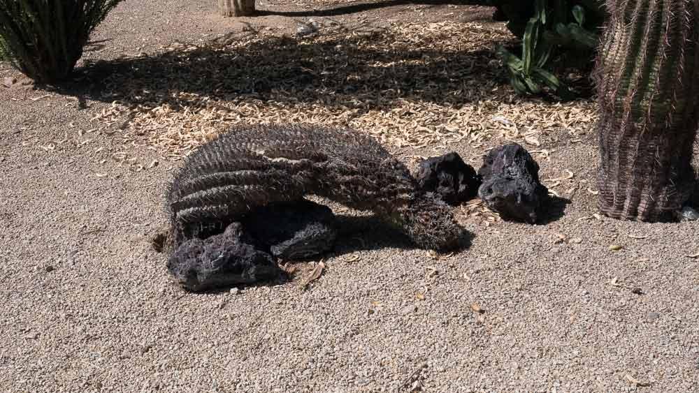 Bowed-Cactus.jpg