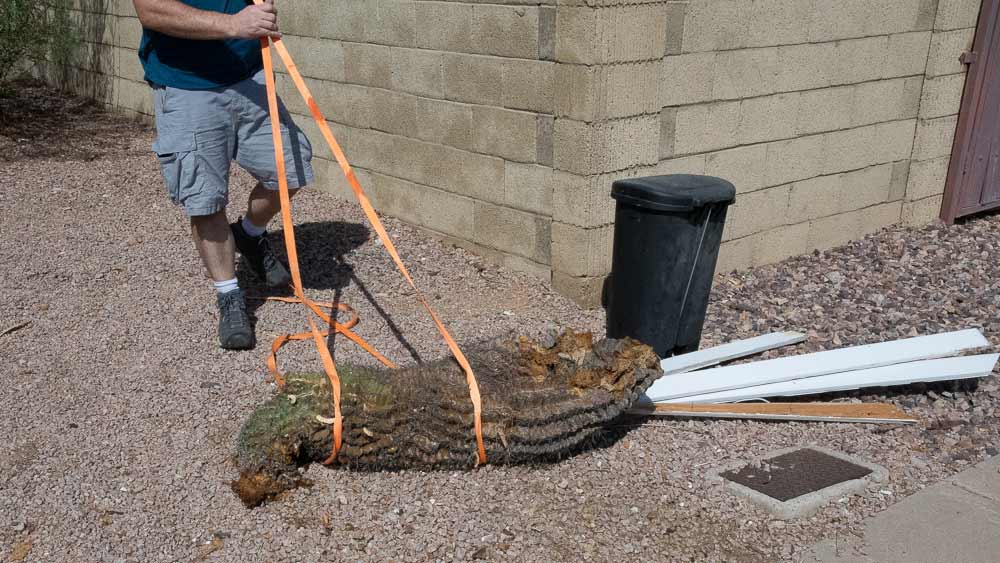 dragging-cactus.jpg
