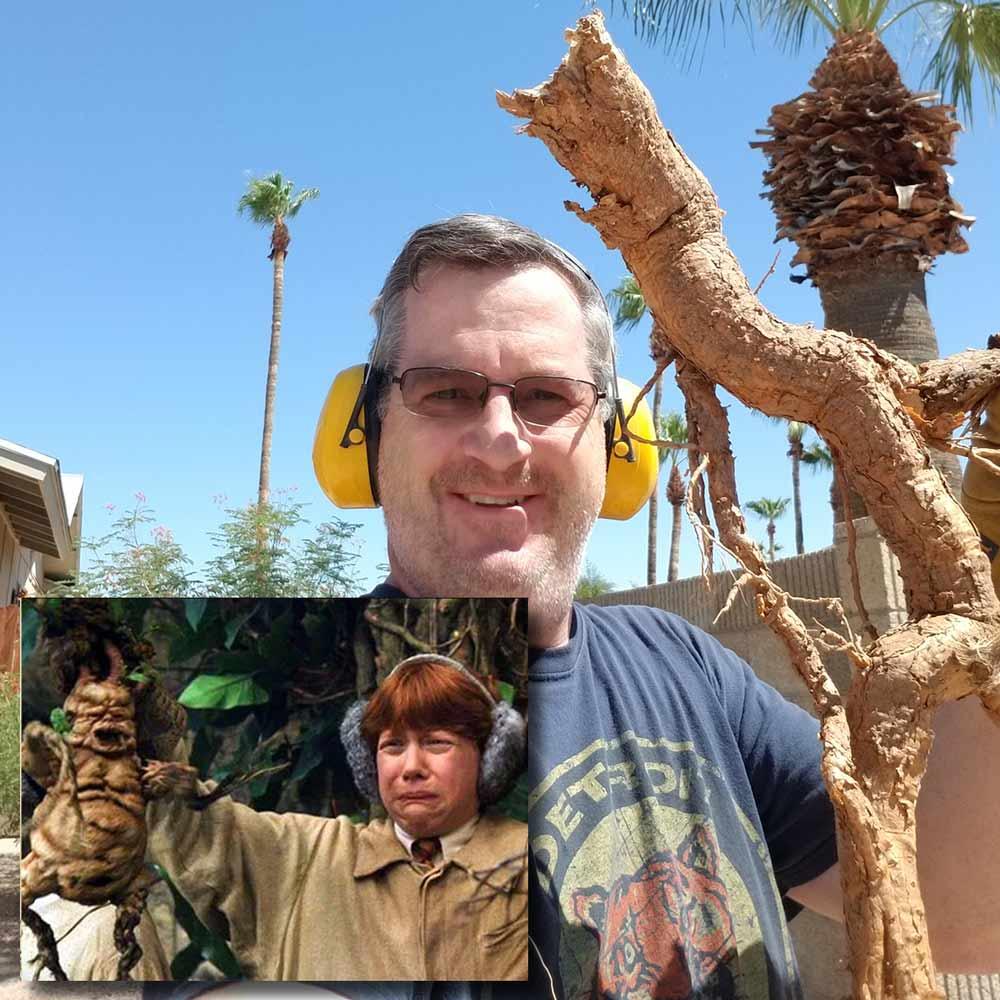 Mandrake-Root.jpg