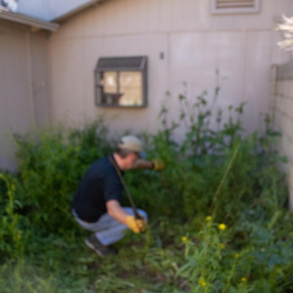 machete-weeds-1.jpg