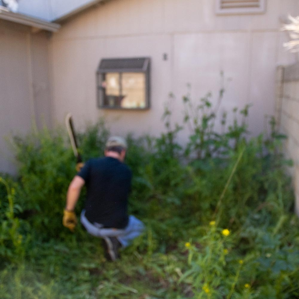 machete-weeds-2.jpg