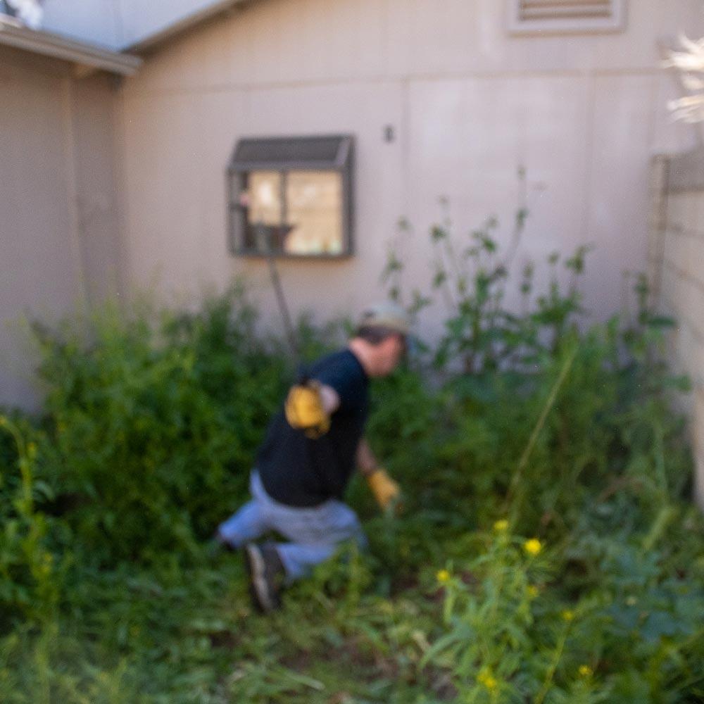 machete-weeds-3.jpg