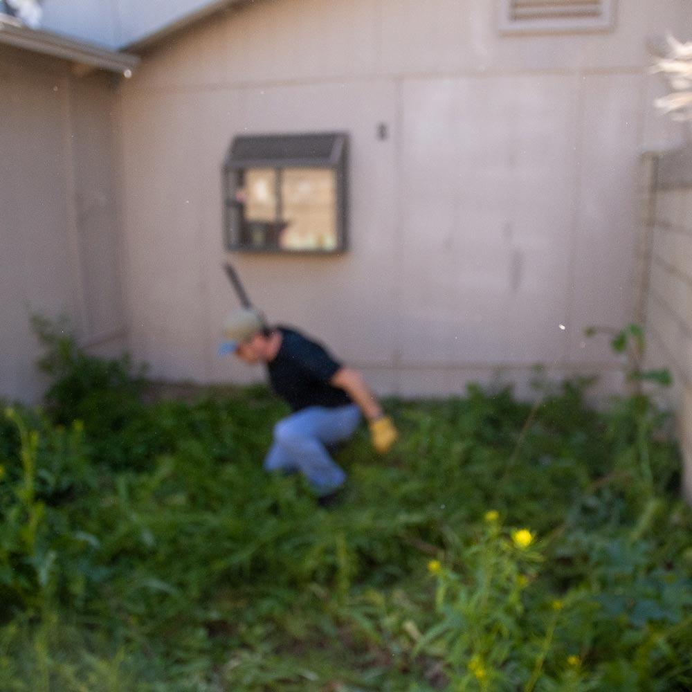 machete-weeds-5.jpg