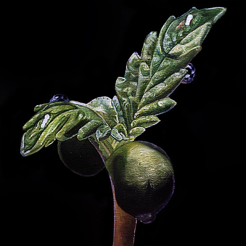 Seedling #1