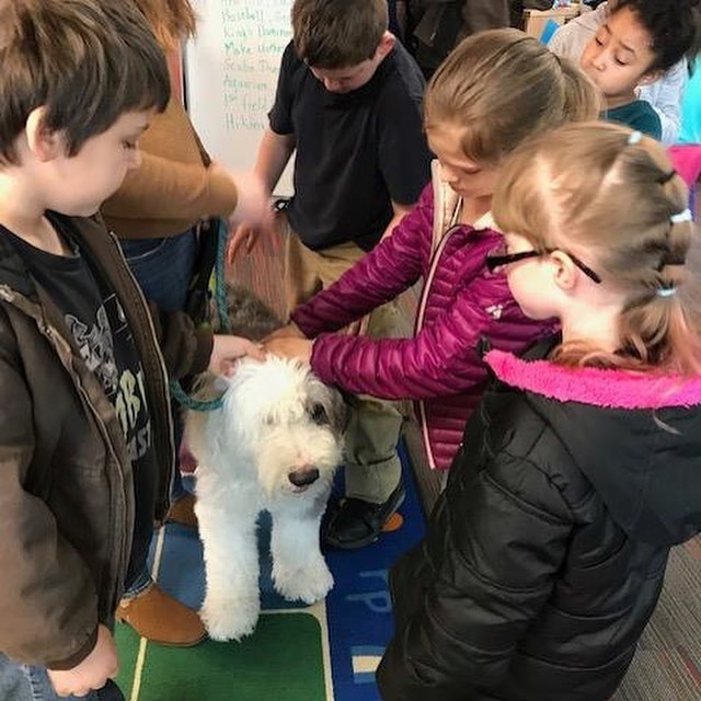 """Sherlock had his first school visit to promote his book, """"Sherlock and the Baskerville Beast"""". The kids loved his story and he got lots of nice pets.  #dogbook #bookdog #oldenglishsheepdog #oes #schoolvisit #sherlock #houndofthebaskervilles #kidsbooks #kidsbookshelf #kidsbookstagram #kidbooks #childrensbooks #childrensbook #childrensbookstagram #childrensbookauthor #kidsauthor #dogstagram #dogsofinstagram #oldenglishsheepdogsofinstagram"""