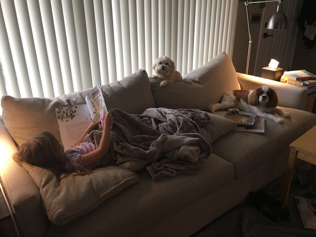 Doggies supervising quiet time reading