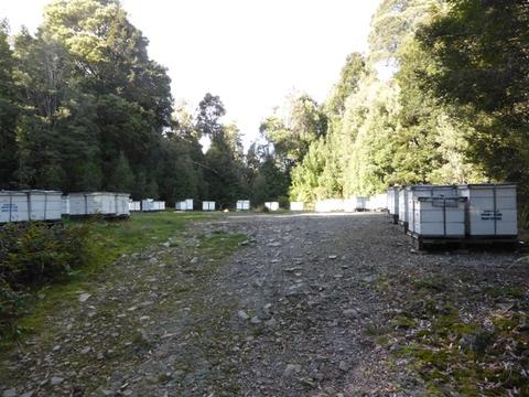 As we travelled north from Strahan to Cradle Mtn, along the west coast, we found more apiaries close to the highway. Many of these were in National Parks or State Forests
