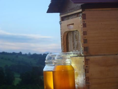 The Flow™ frame honey emptying into the jar – no extracting equipment needed