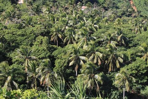 Inland flora