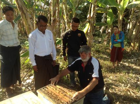 Trevor Monson inspecting  Apis mellifera hives – Kalemyo, Myanmar