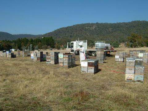 Is bulk feeding of sugar syrup to honeybees part of a sustainable future?