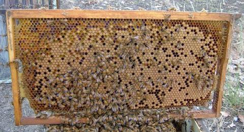 Bees need pollen from a variety of sources at any time. Resource security is vital to the sustainability of beekeeping
