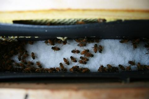 Feeding dry sugar in a frame feeder. This will help a hive survive, but does not stimulate the raising of brood