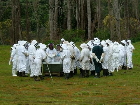 Interested hobbyists being shown through hives by experienced beekeepers