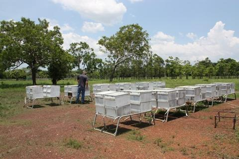 Beehives on stands at Humpty Doo
