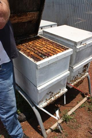 Hives holding their own in spite of the heat