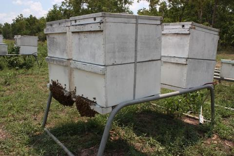 Hives in the back yard, newly-collected swarm in the background