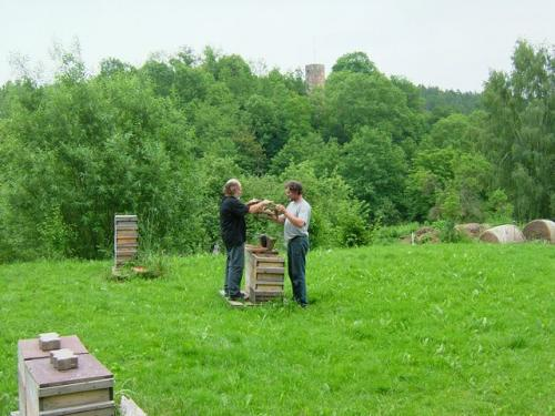 The next day, the gentle nature of the German bees was again demonstrated as I helped Andreas put out queen cells, with minimal use of smoke and protective clothing. The tower from the ruined castle, Schloss Wallenstein, is in the background.