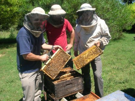 Inspecting an Italian breeder hive with Fernando Roth (in blue shirt, owner of 9,000 hives)
