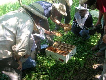 Inspecting a 6-way nuc