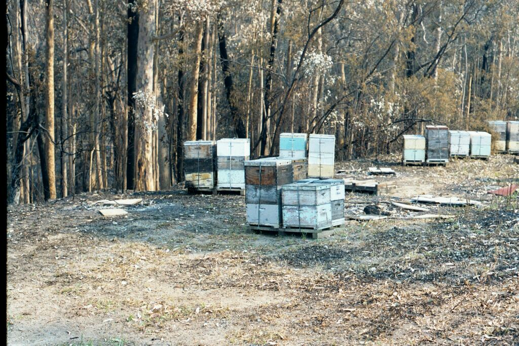 Testimony to the damage that can be done by wildfire, even on a well-prepared beesite. Many hives have been lost this year to bushfires.
